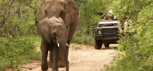 Wine, Dine & Big Five - The Best of Both!